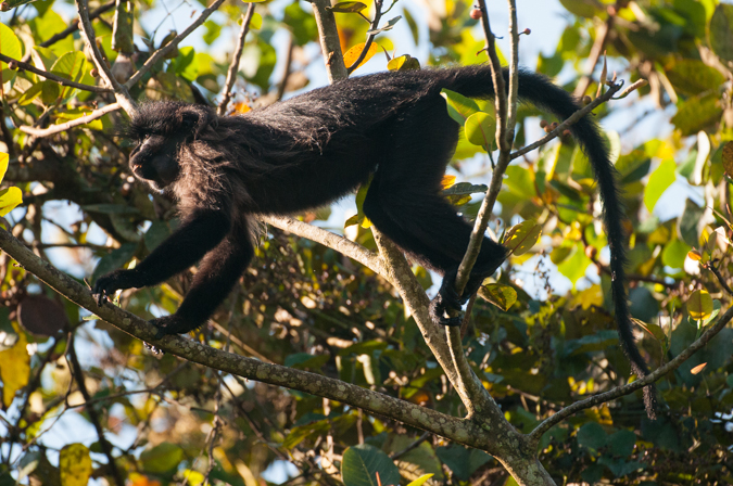 Uganda primates